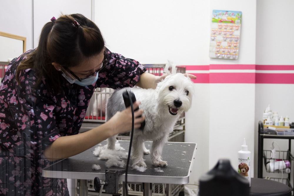 dog grooming Singapore