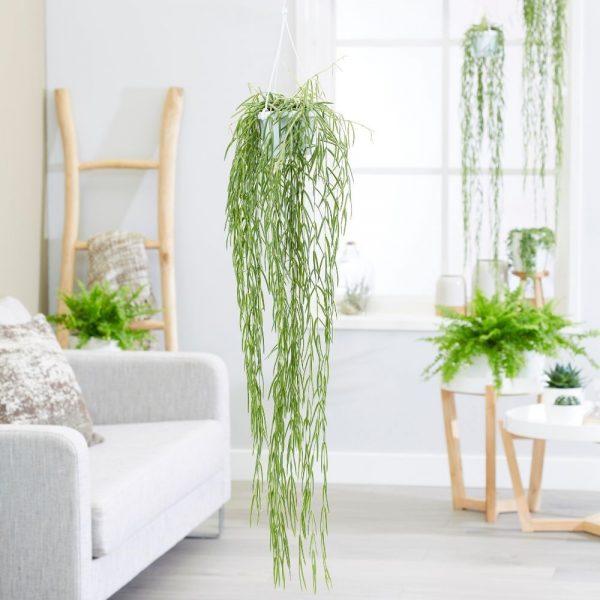 Beautiful hanging plants